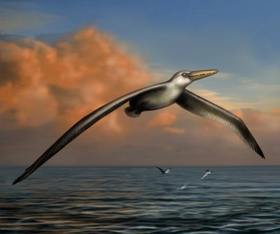 Pelagornis (2014). The largest flying bird of all time, looked like a giant seabird with teeth.