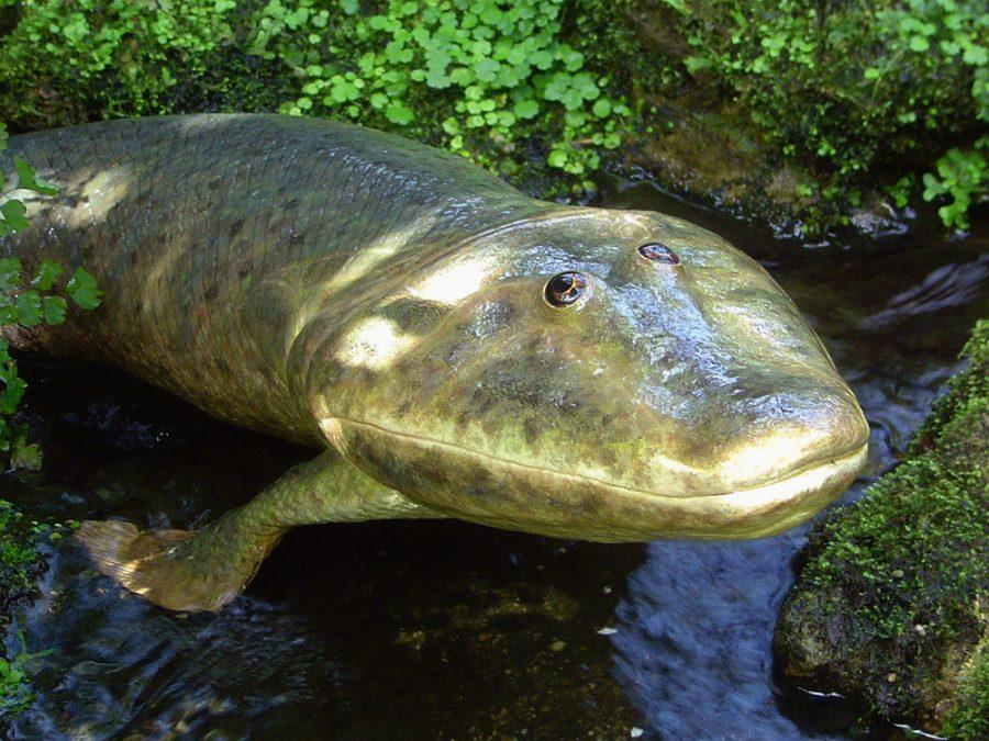 Tiktaalik+%282006%29.+The+first+boned+creature+to+walk+on+land.+A+transition+between+fish+and+amphibian.