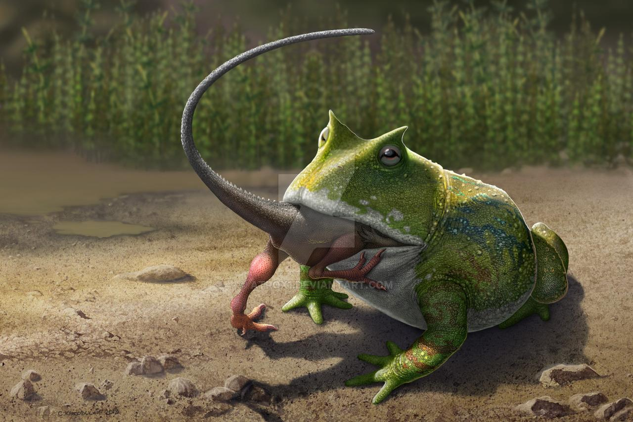 A giant frog from Madagascar, could have potentially eaten young dinosaurs.