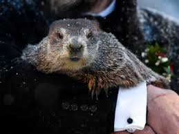 Punxsutawney Phil Has Spoken